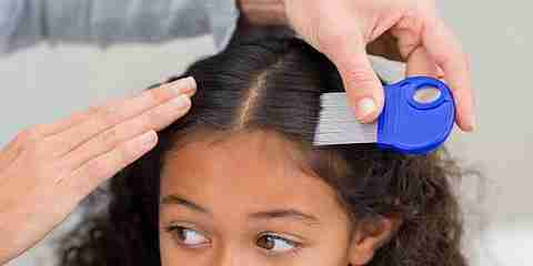 can black kids get lice in head hair black afro american person