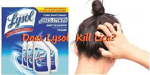 does lysol kill lice